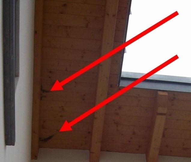 muffa tetto legno
